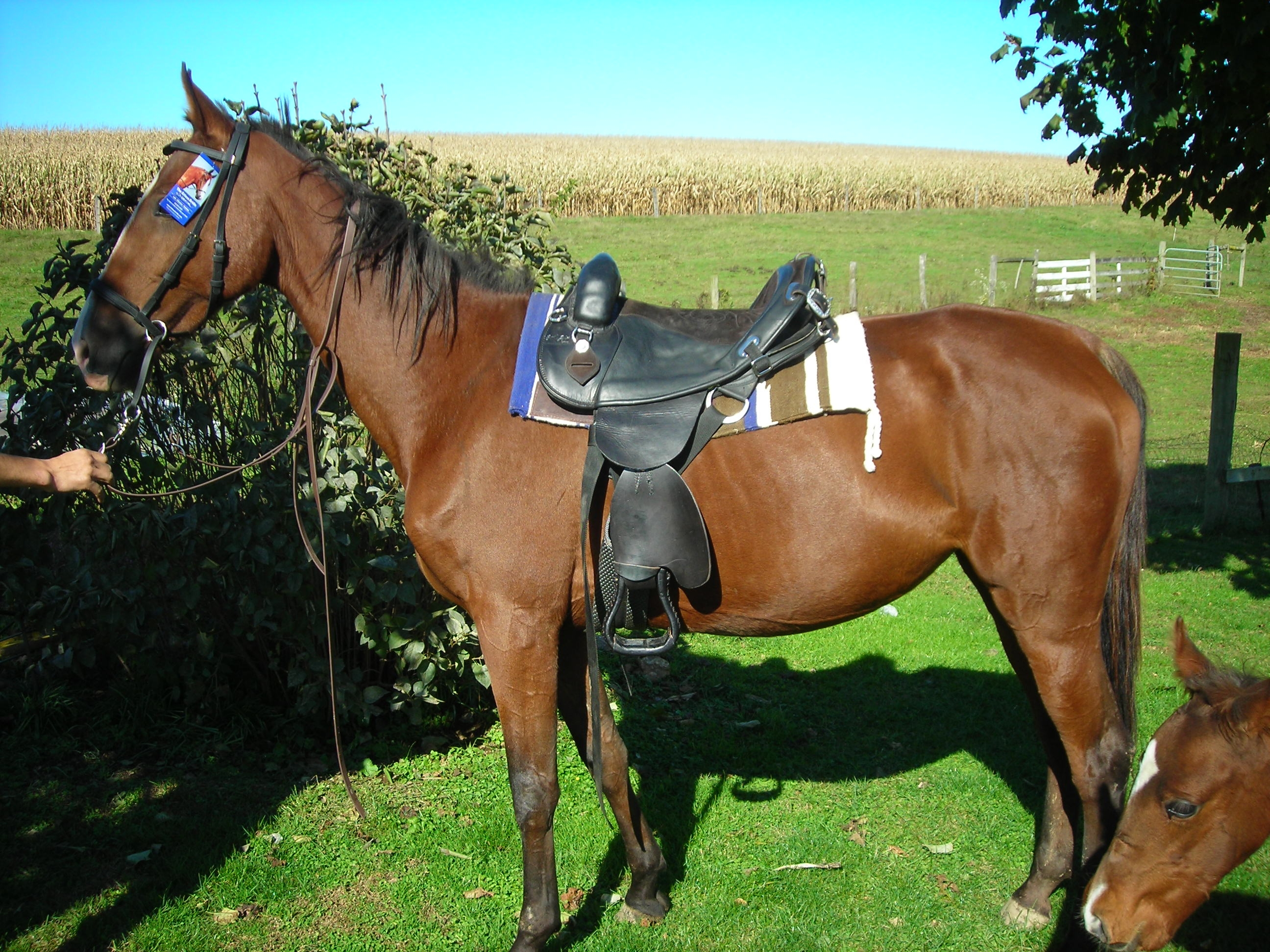 saddle and horse From western to english and australian horse saddles, saddleonline has you covered great values and styles look through our inventory today.